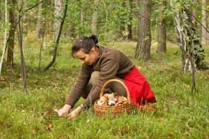 regole dei funghi raccogliere