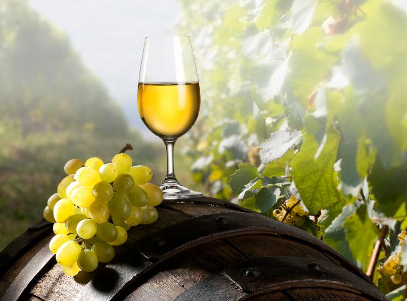 vino bianco Vernaccia Toscana