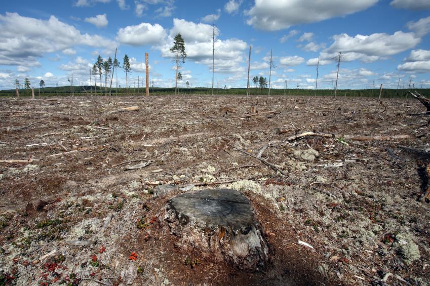 Destruction Forest Felling of natural forest, north Sweden