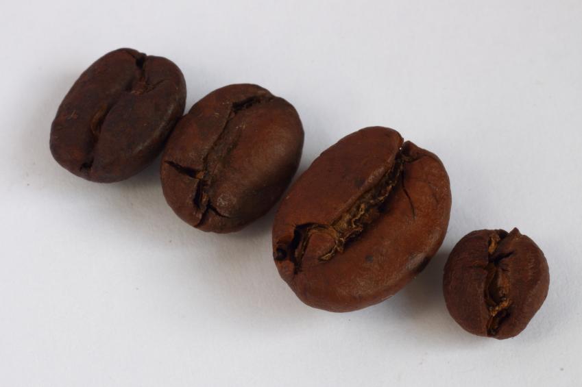 Chicchi di caffè in fila