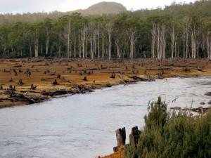 deforestazione illegale disboscamento foreste iStock_000000883342_Small