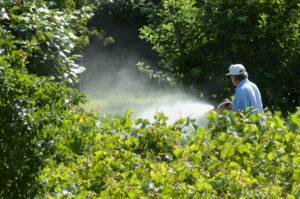Spraying the garden glifosato