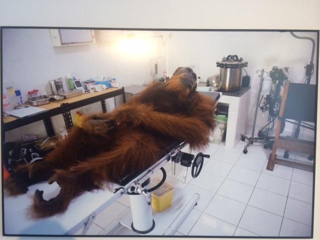 orango, olio di palma