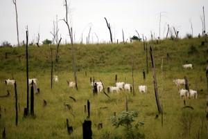 brasile deforestazione disboscamento iStock_000007201386_Small