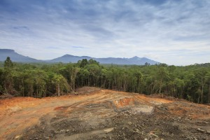 Deforestation logging environmental problem in Borneo, Malaysia