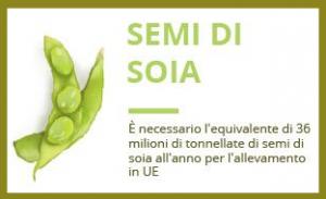 semi di soia europa