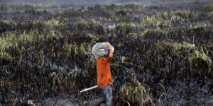 indonesia_deforestazione_clima