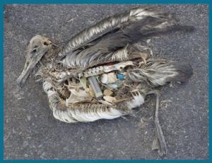 uccelli marini plastica