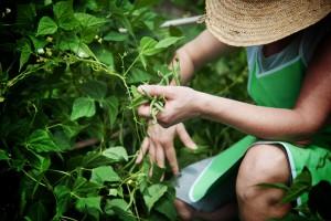 agricoltura brevetti selezione biologico