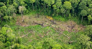 Rain forest destruction in Thailand form Aerial view