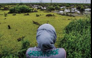 indonesia greenpeace olio di palma