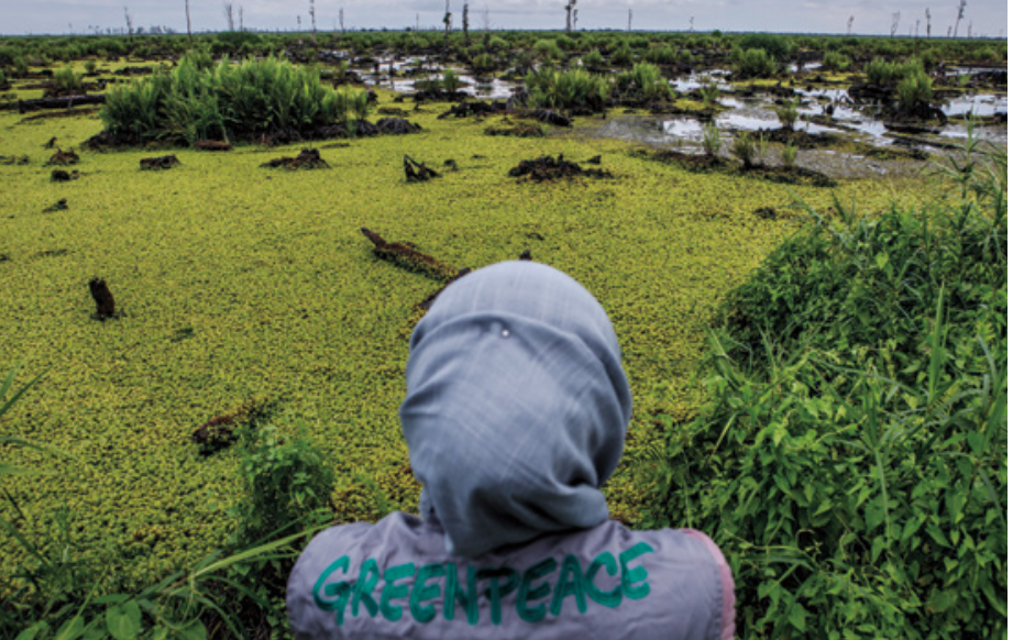indonesia greenpeace olio di palma