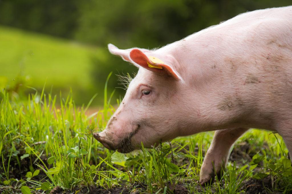 prodotti di origine animale