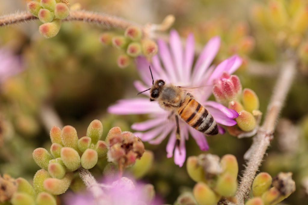 api ape fiore miele insetti