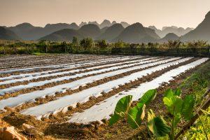 campi coltivazione agricoltura China