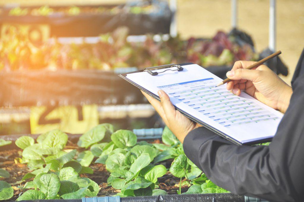 controlli mercato verdura