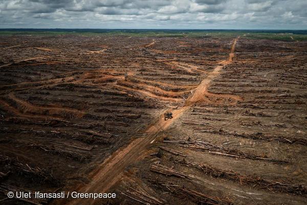 greenpeace deforestazione olio di palma papua indonesia